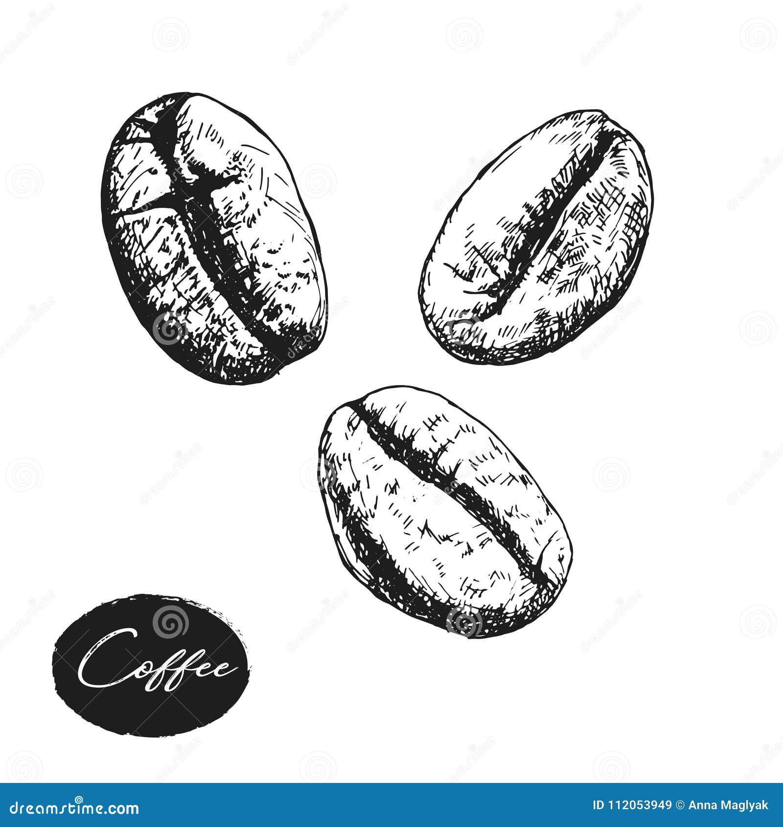 Feijoes De Cafe Pintados Esboco Desenho Do Vetor Ingrediente