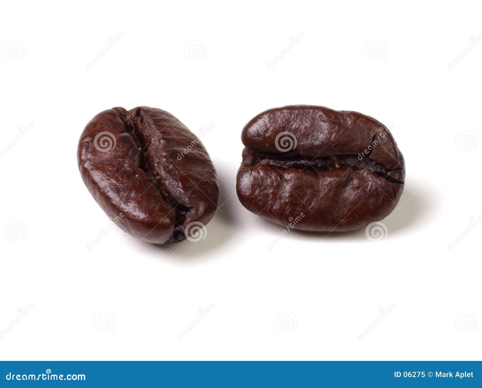 Feijões de Java