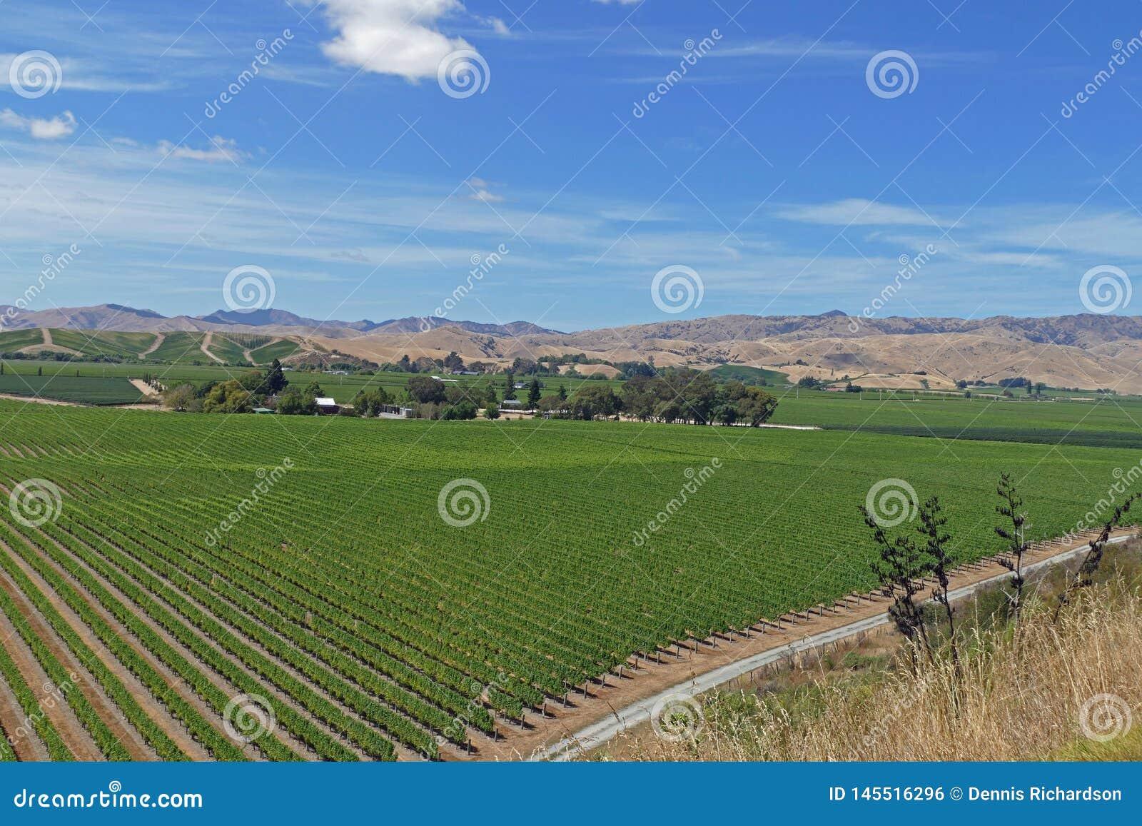 Feine Weine von einem Weinberg in Neuseeland