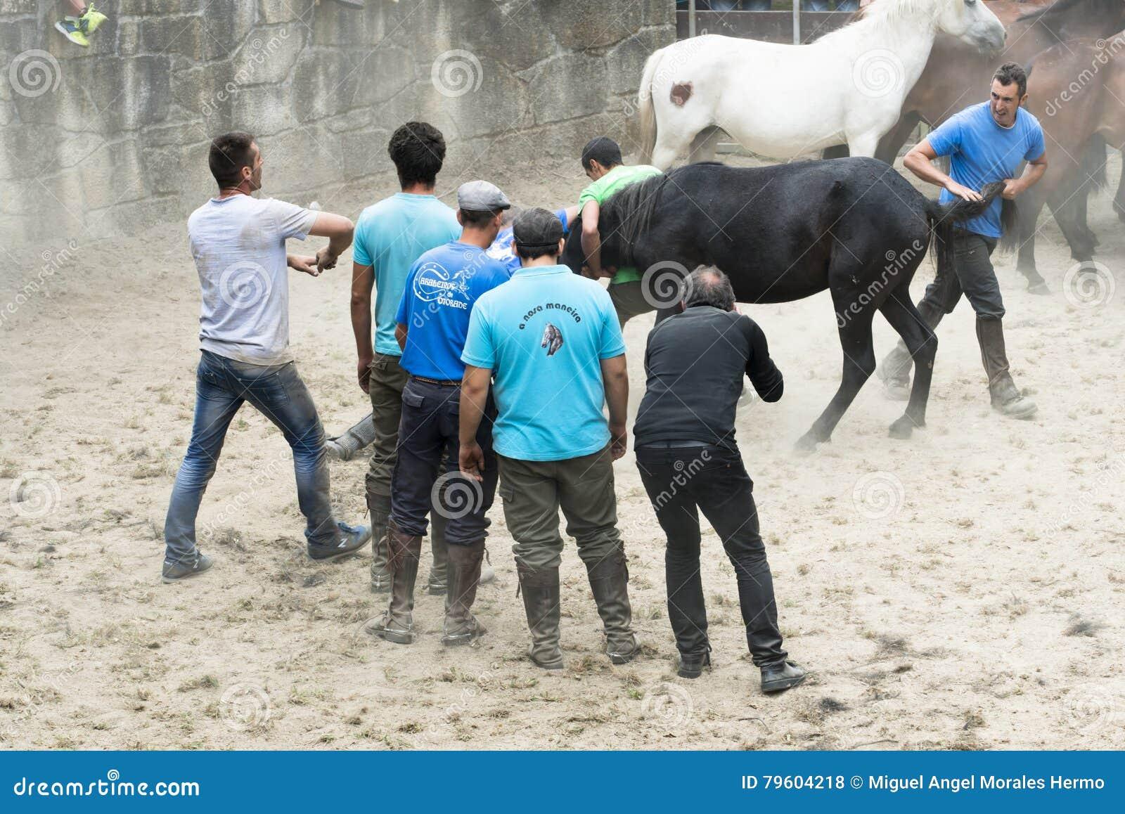 Feira de cavalo