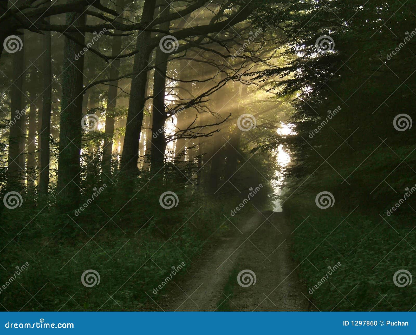 Feixes luminosos na floresta