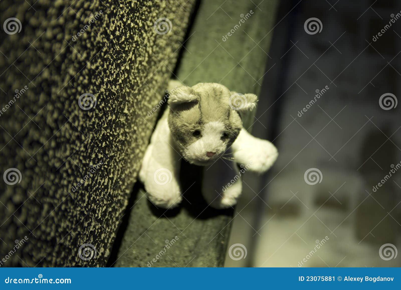 Felande toy för katt