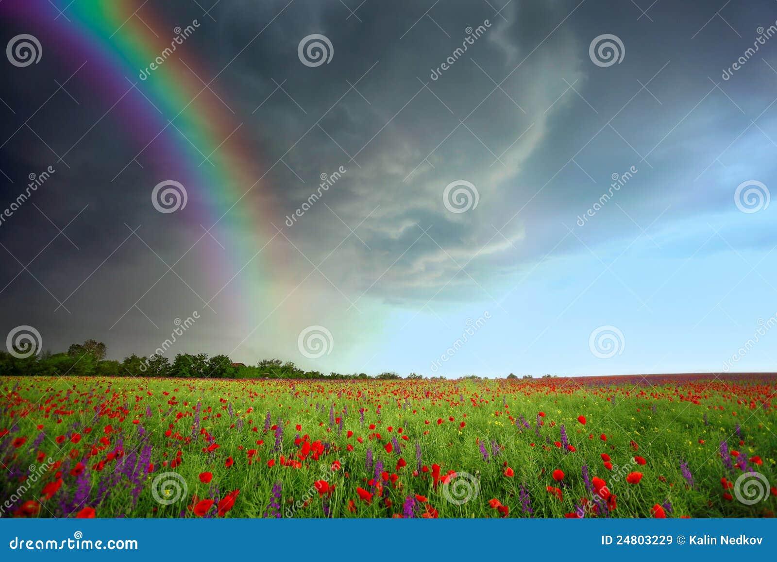Feld der Blumen