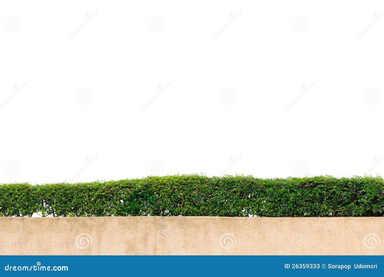 Feld des grünen Grases