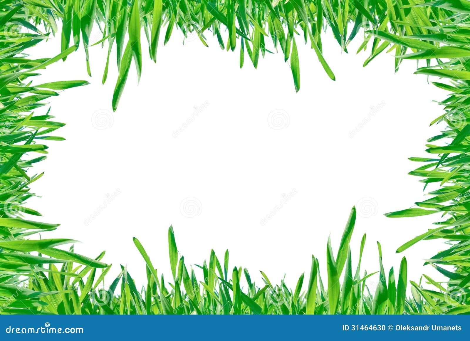 Feld des grünen Grases lokalisiert auf einem weißen Hintergrund.