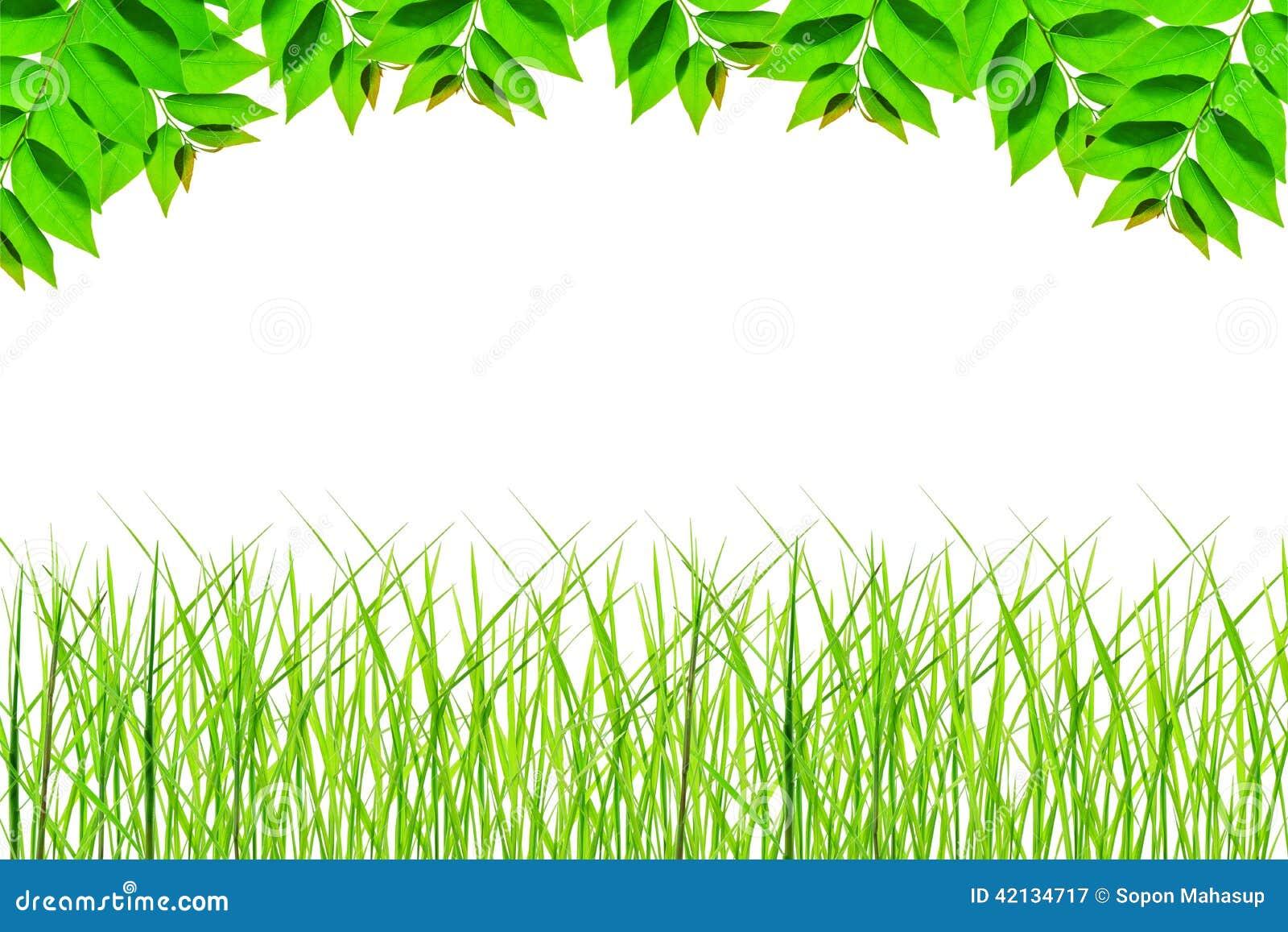 Feld des Nationsgrüns