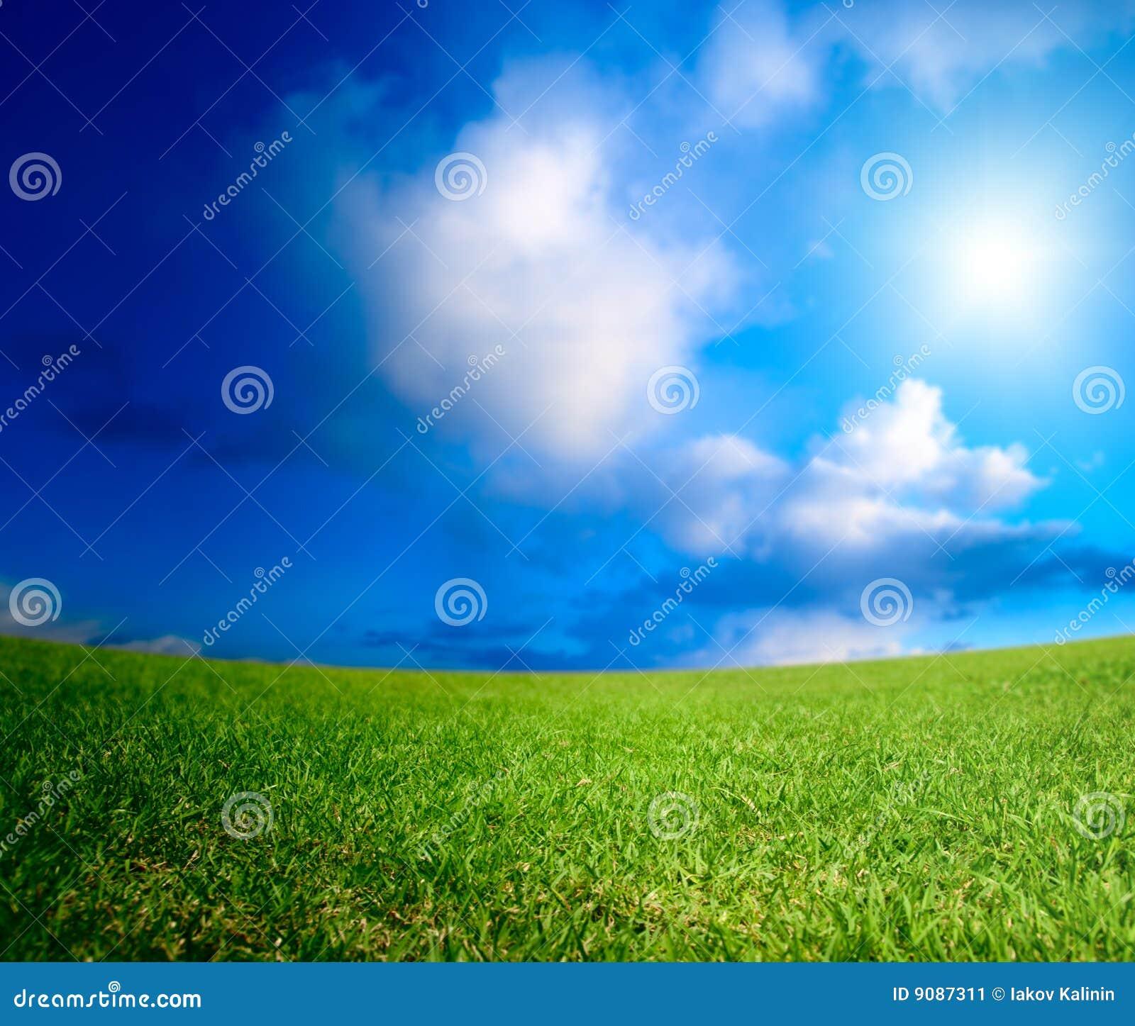 Feld des Sommergrases