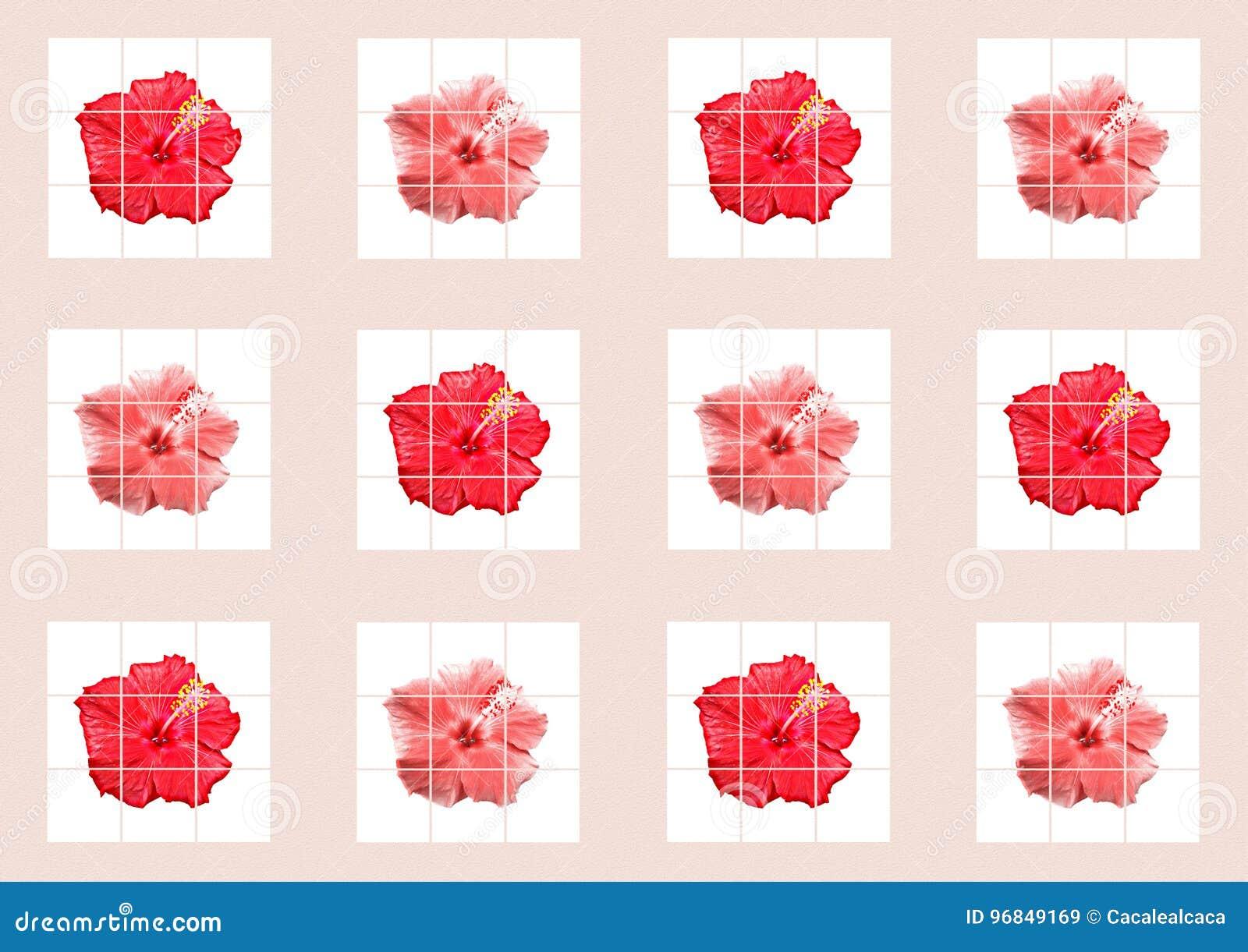 Feld Fotocollage - Blume - Hibiscus