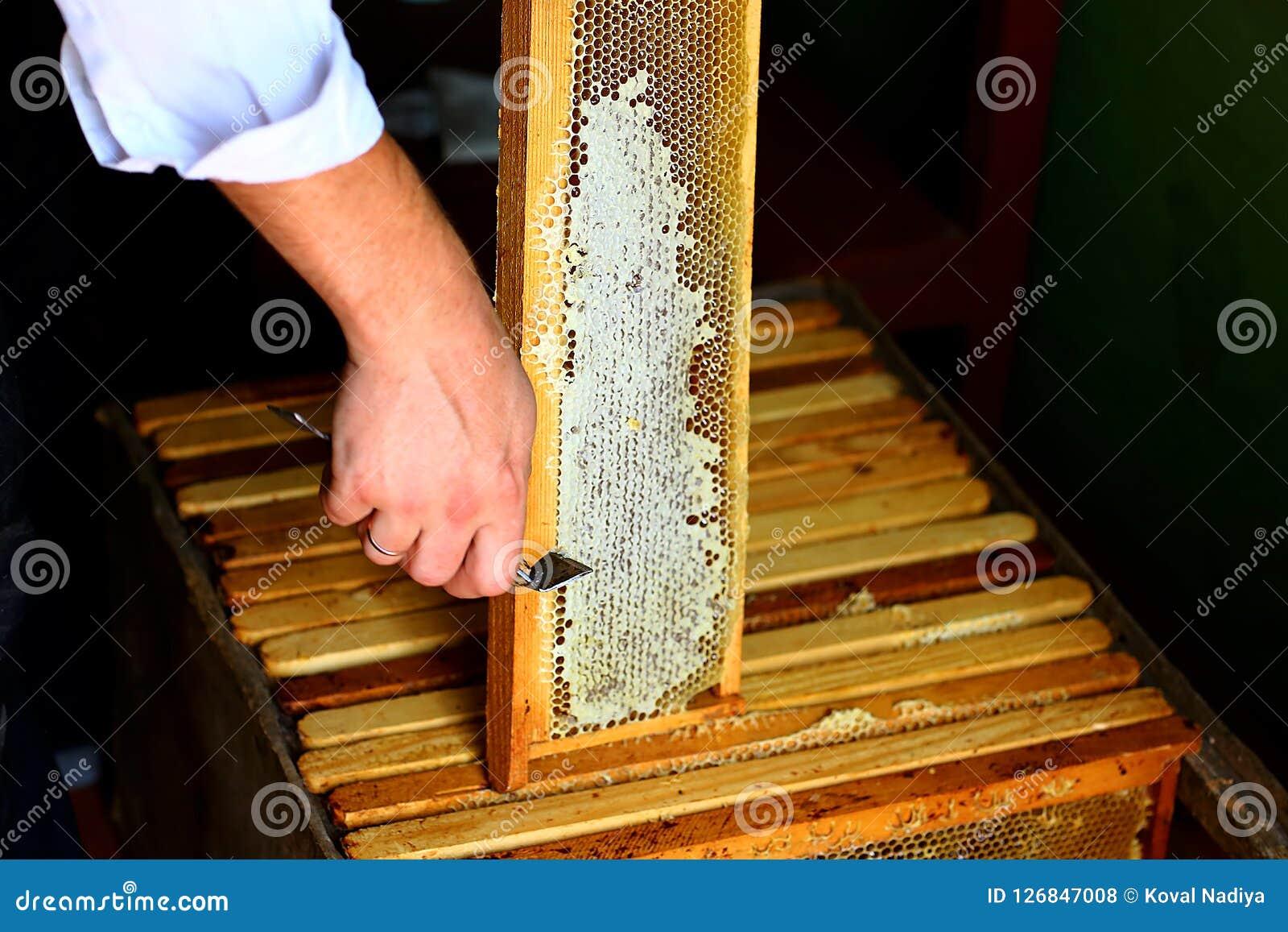Feld mit Bienen Bienenwabe mit dem Die Mütze abnehmen der Gabel Roher Honig, der von den Bienenbienenstöcken geerntet wird Imkere