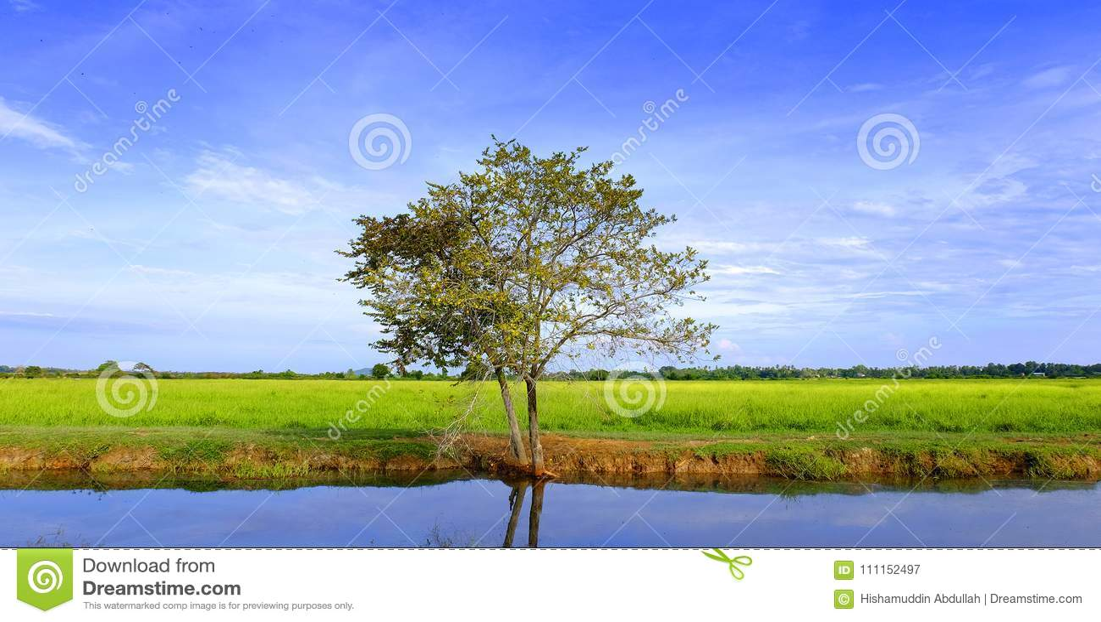 Feld mit dem blauen Himmel