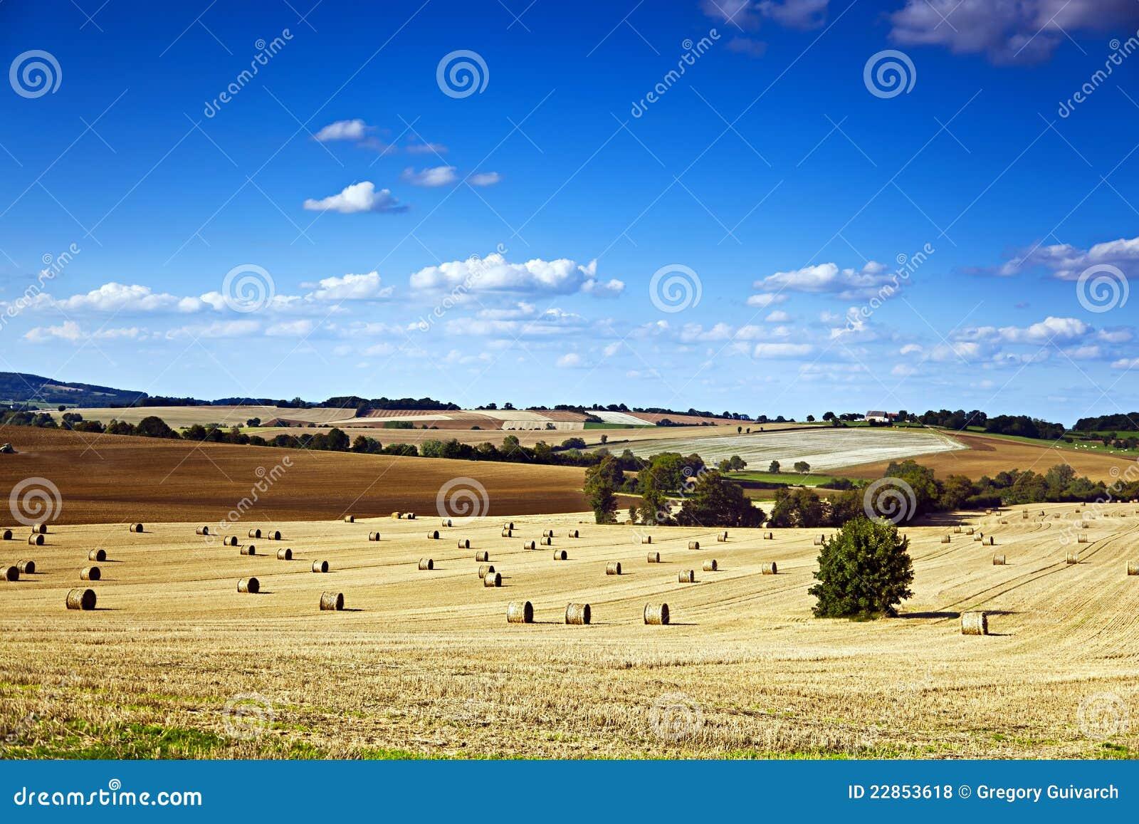 Feld und Bauernhof
