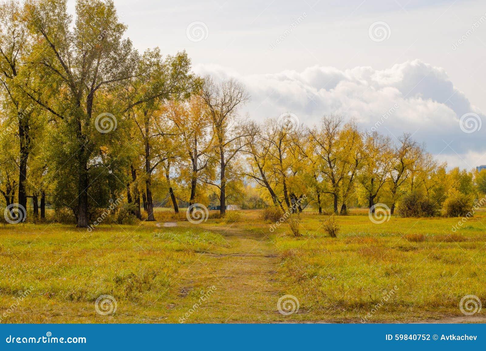 Feld- und Pappelwaldung