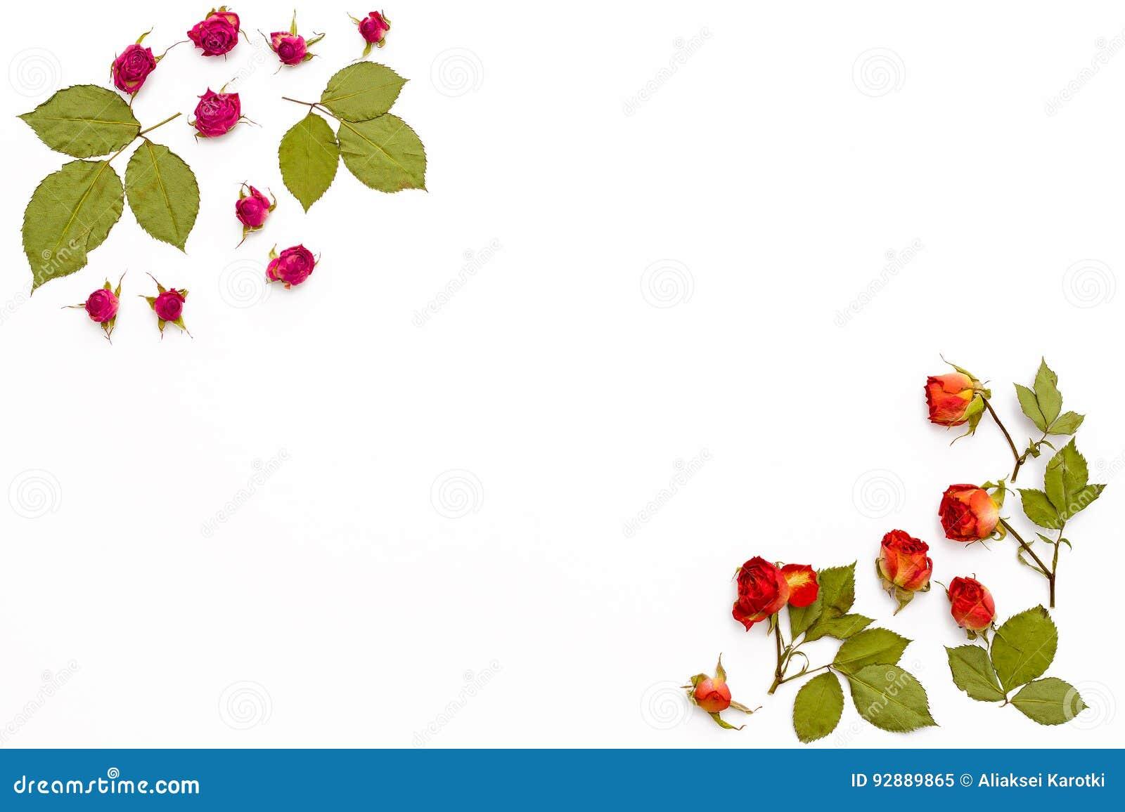 Feld von den Blumenrosen auf einem weißen Hintergrund Blumenmuster für Grußkarten für Geburtstag, Hochzeit, Mutter ` s Tag, Valen