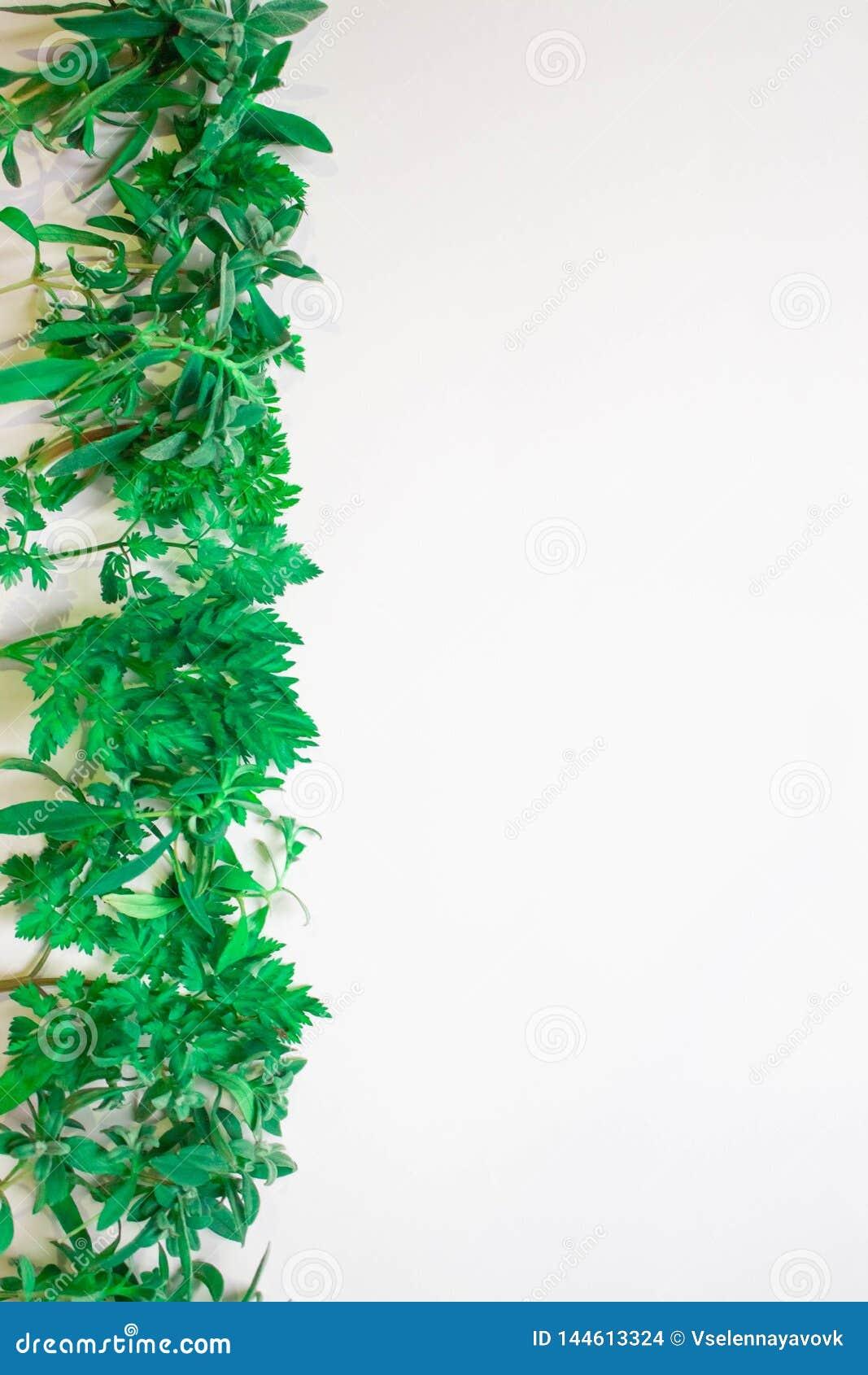 Feld von den grünen Niederlassungen, Blätter auf einem weißen Hintergrund Flache Lage, Draufsicht