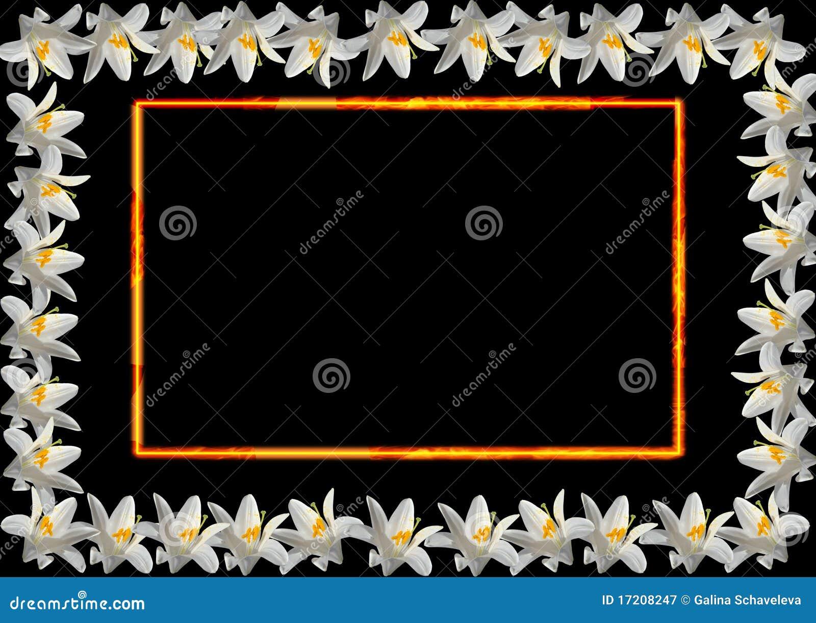 Feld von der weißen Lilie