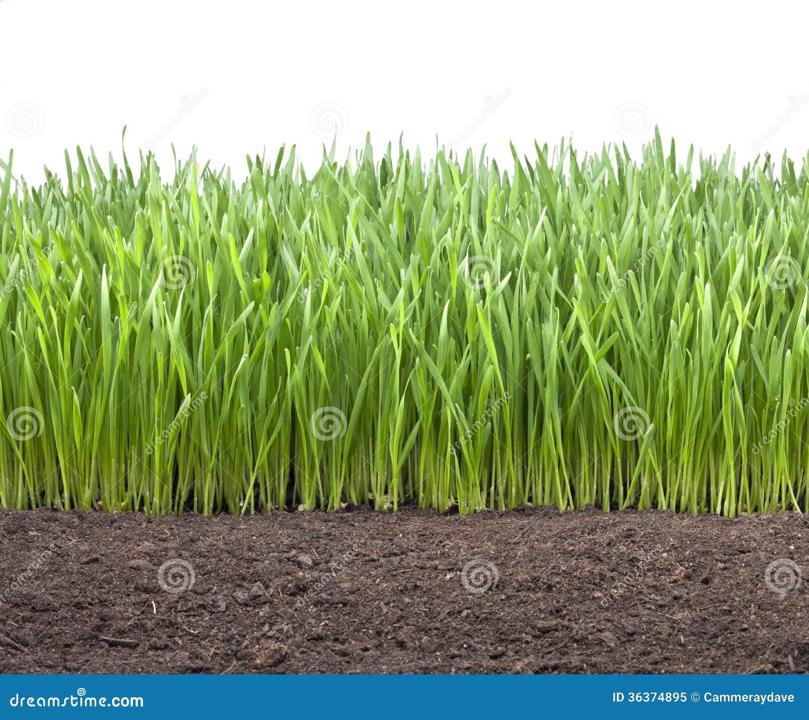 Feld-Weizen-Gras-Boden Lizenzfreies Stockfoto