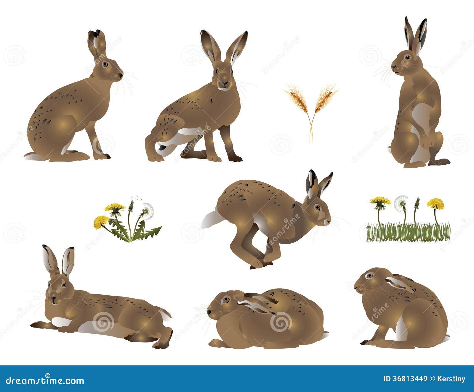 feldhase stock abbildung illustration von wirbeltier 36813449. Black Bedroom Furniture Sets. Home Design Ideas