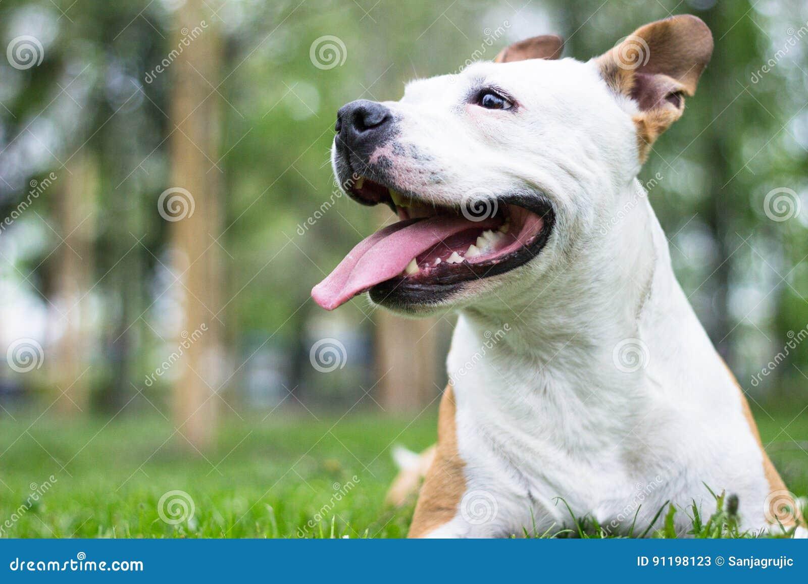 Felicidad del perro