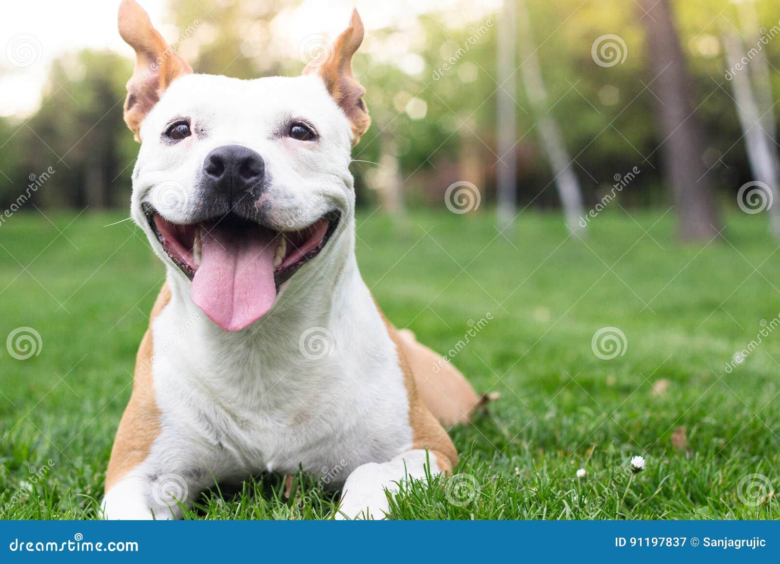 Felicità del cane