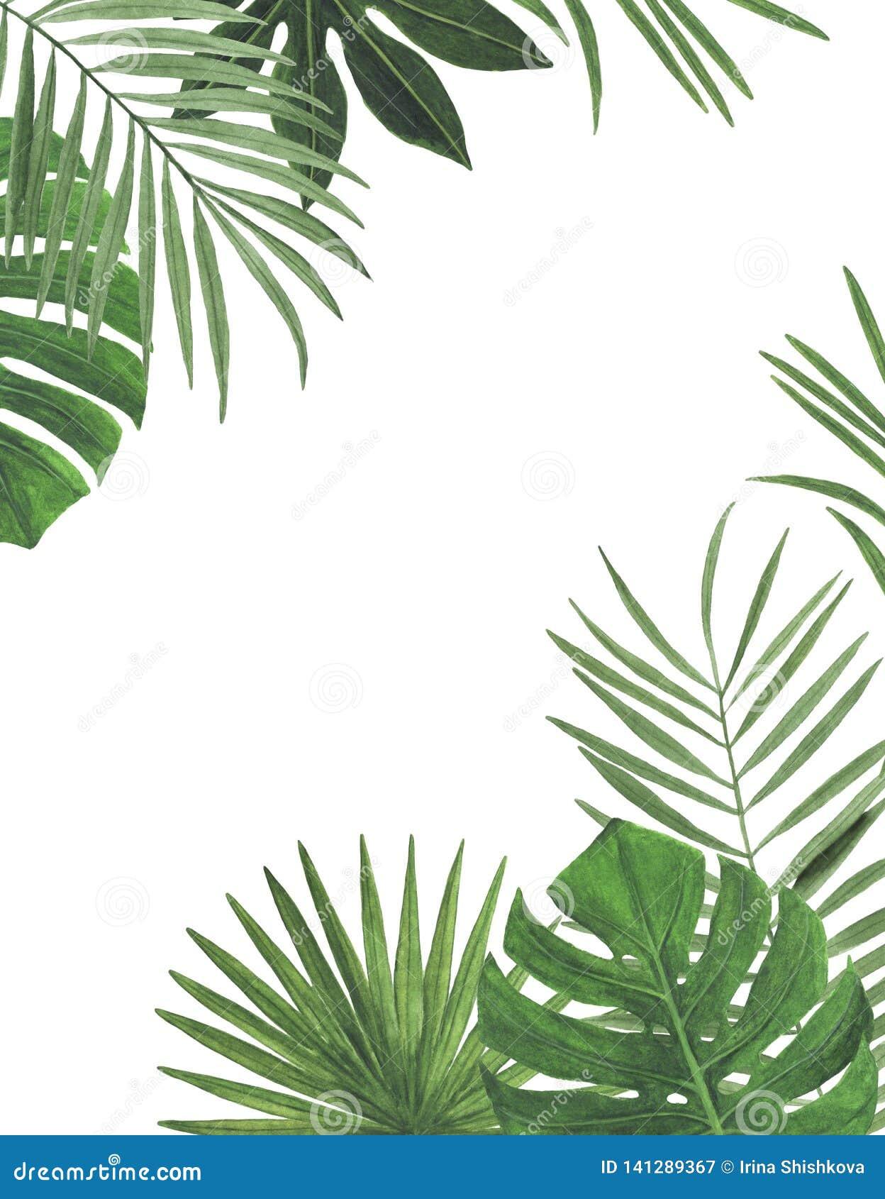 Felicitações botânicas da decoração do projeto do convite do cartão da decoração das decorações das ilustrações da aquarela dos t