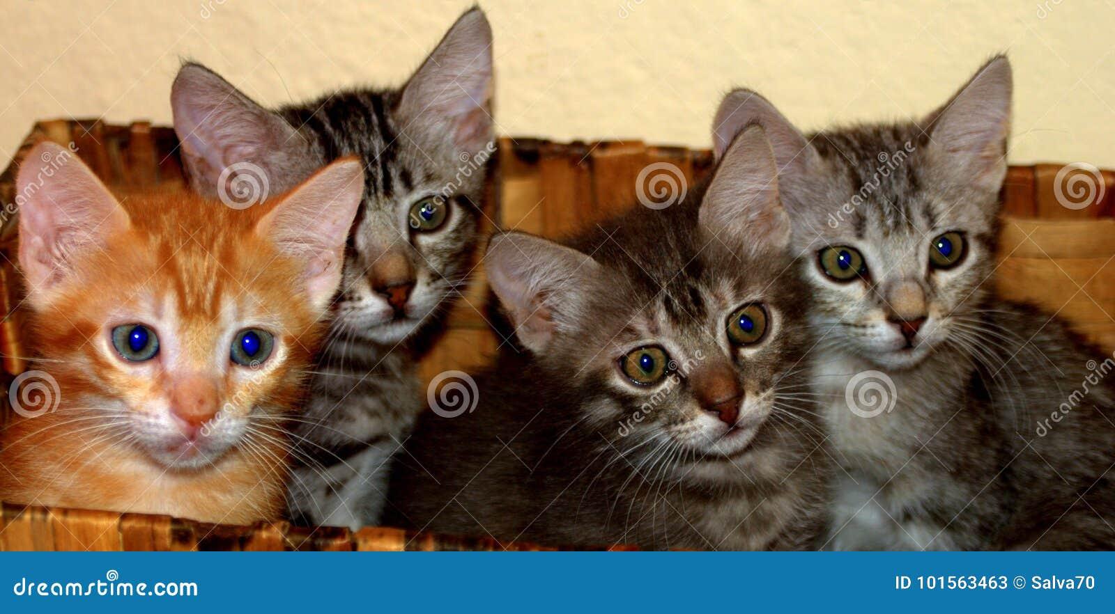 Felines