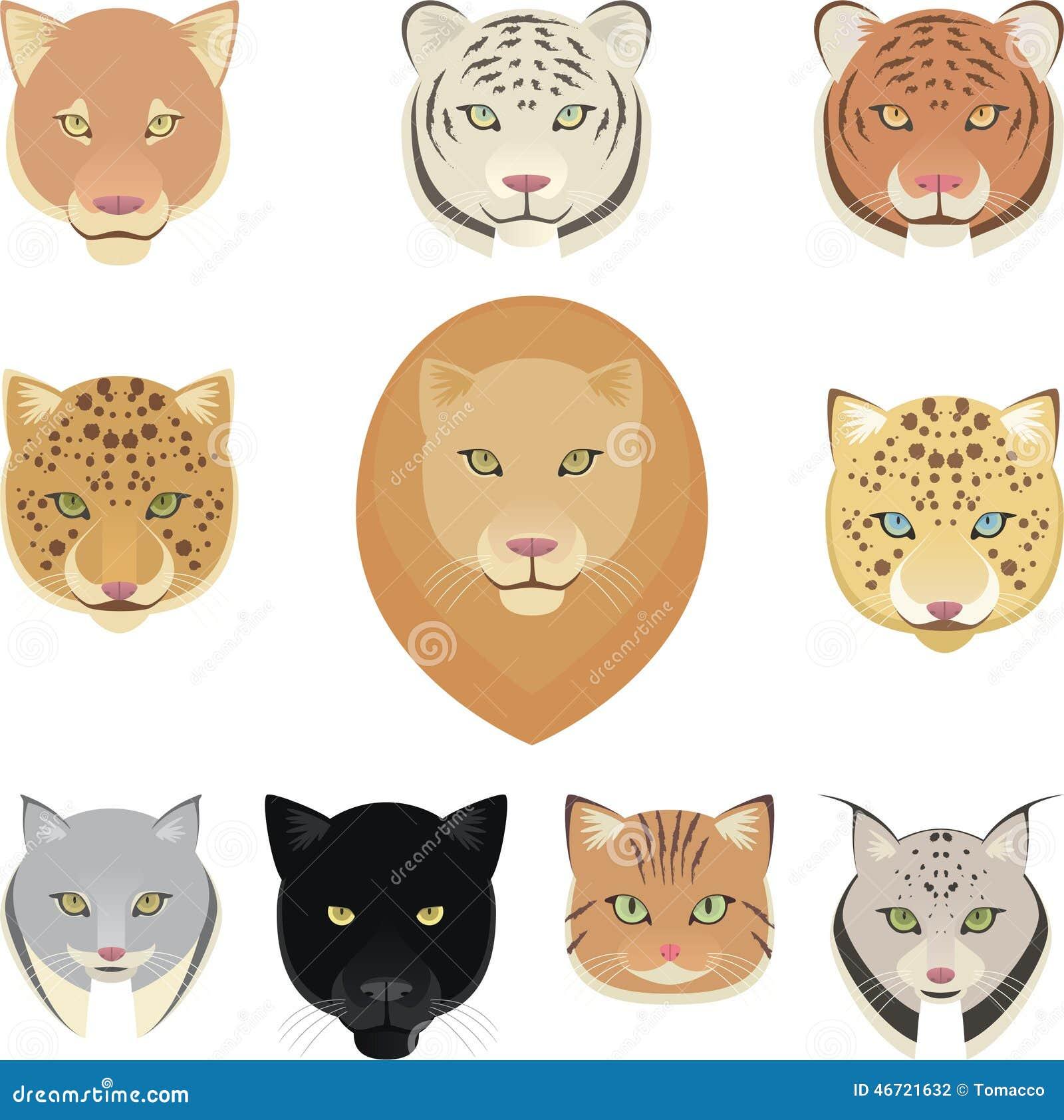 Felines Leopard Panther Lion Tiger Cougar Jaguar Heads