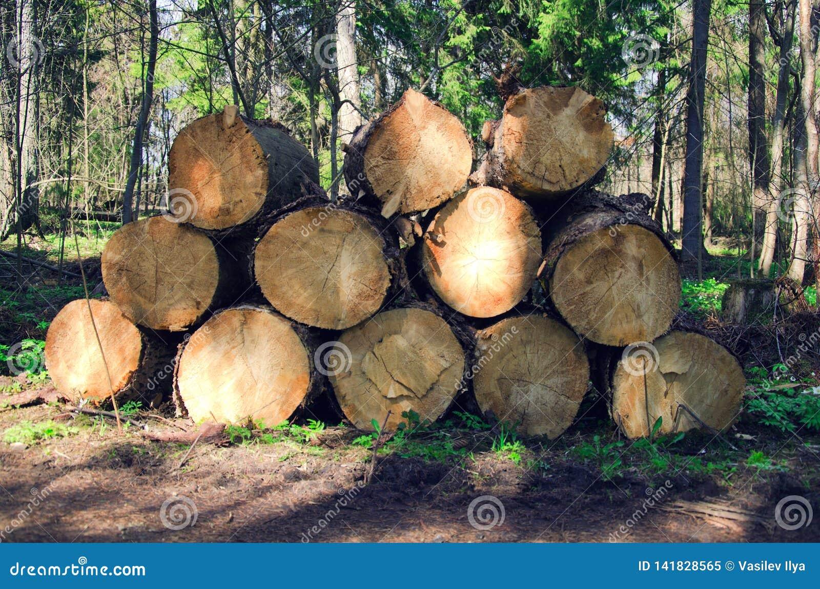 Felled bomen in registreren