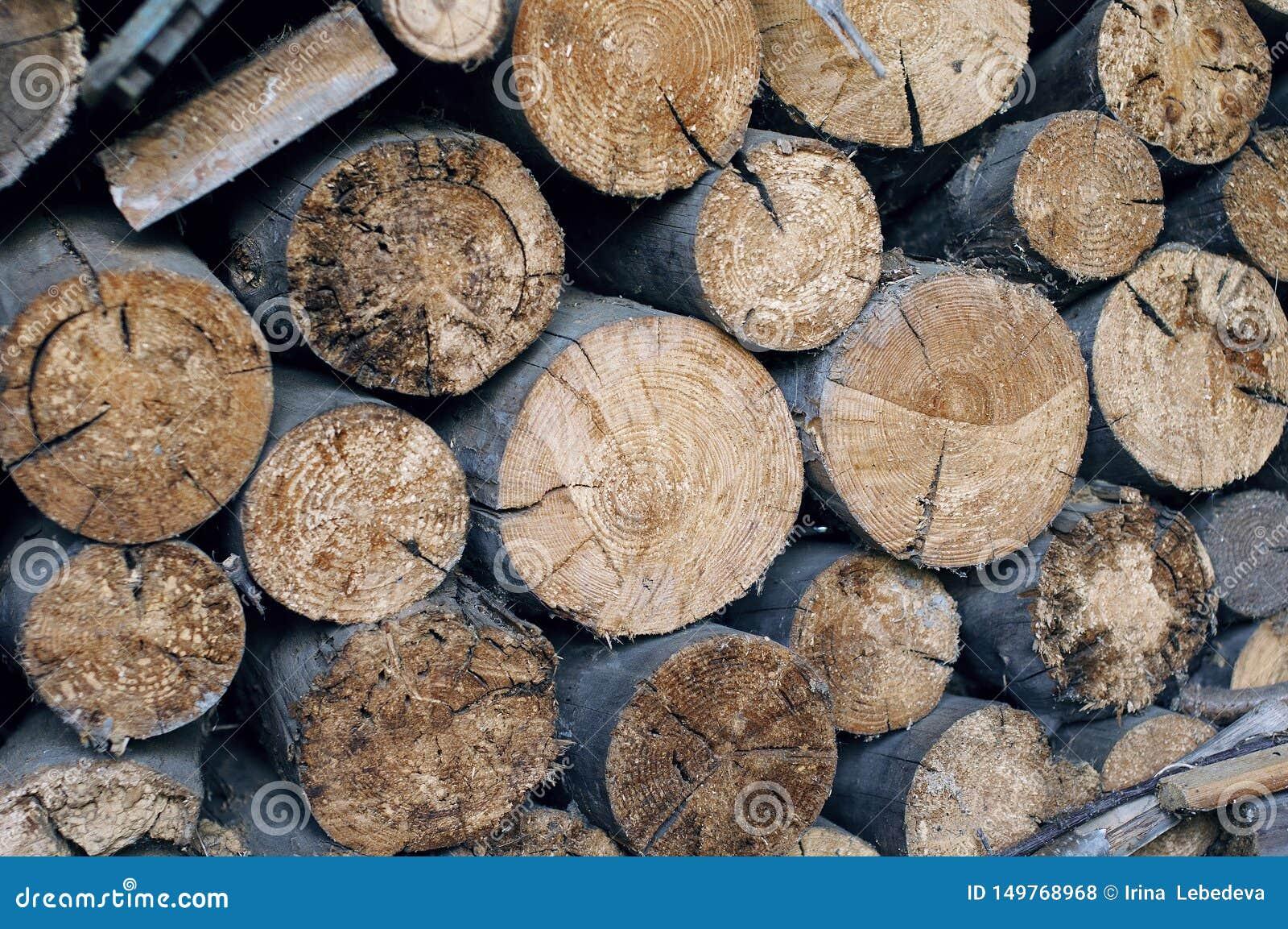 Felled bomen, wat zichtbare besnoeiing en éénjarige ringen is