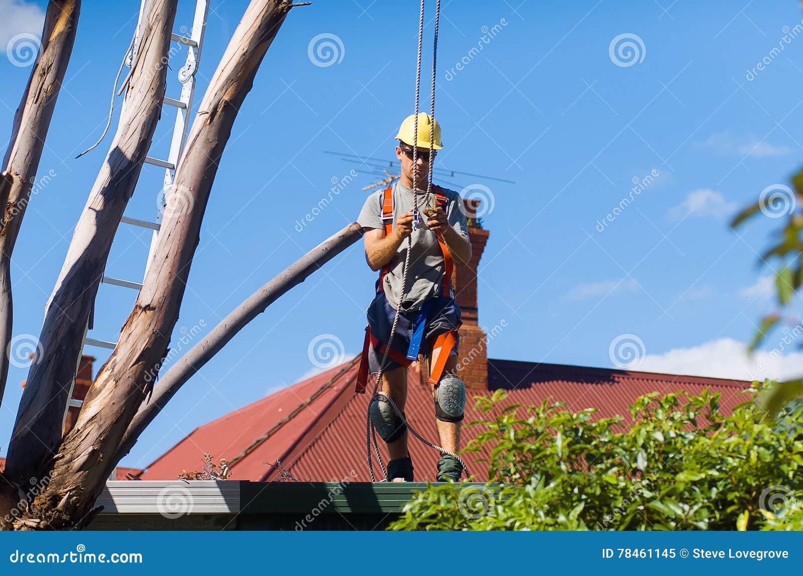 Feller del árbol en el trabajo