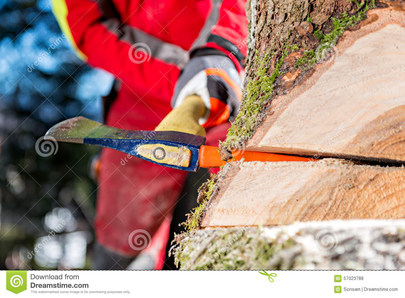 tree felling lumberjack chainsawing fallen tree royalty free stock photography cartoondealer. Black Bedroom Furniture Sets. Home Design Ideas