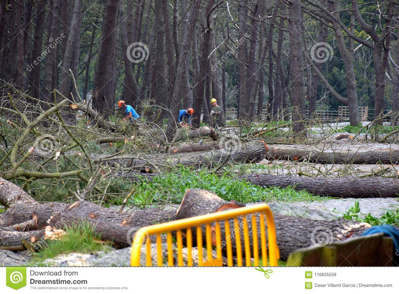 Fotos De Navia felling of trees in navia spain editorial stock image