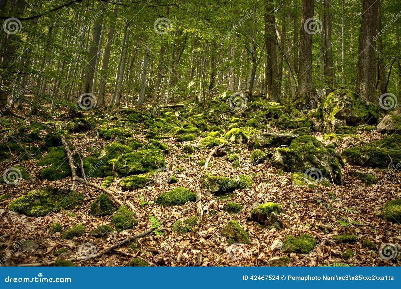Felsen bedeckt durch Bryophyte