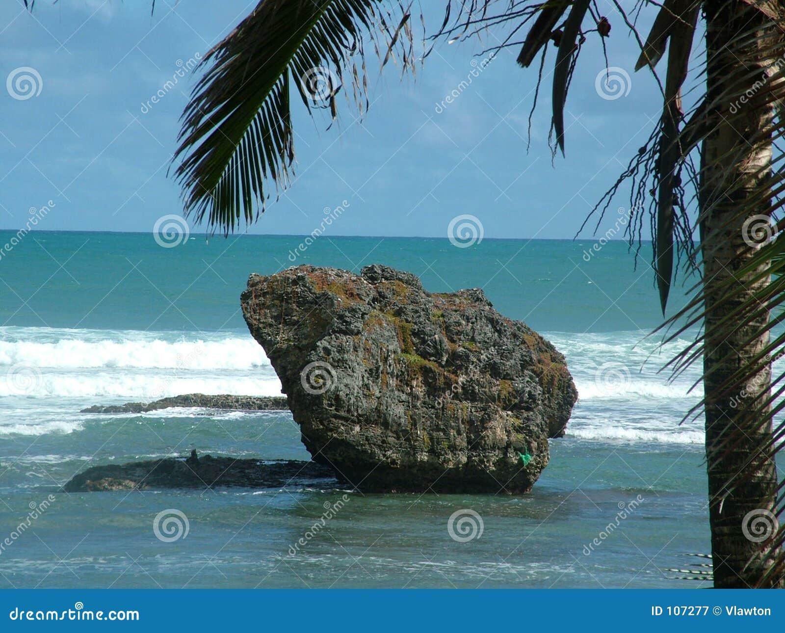 Felsen und palm_2