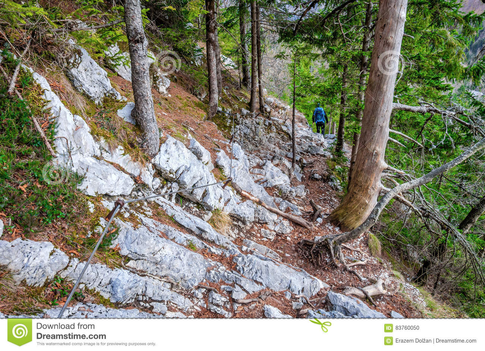 Felsige Spur Mit Kabel Durch Wald Stockfoto - Bild: 83760050
