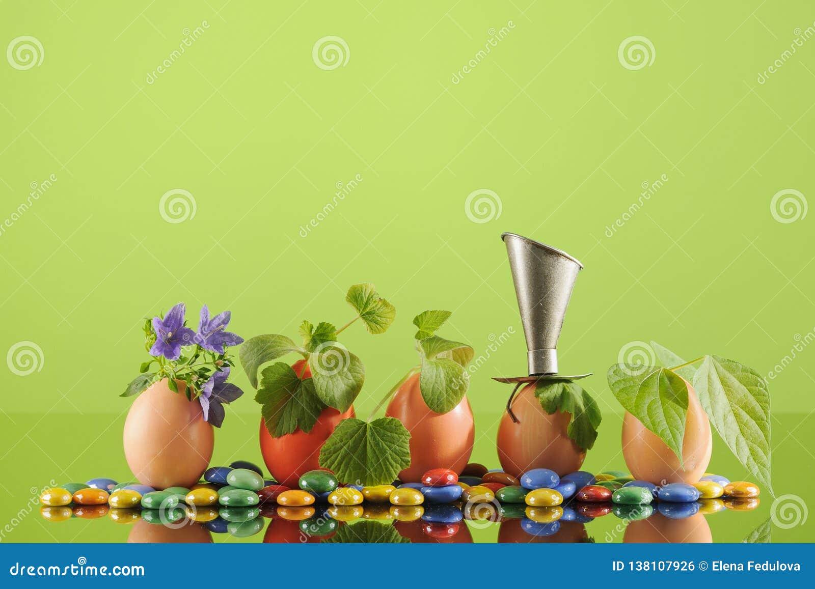 Fem organiska plantaväxter i påskägg på grön bakgrund för limefrukt Eco arbeta i trädgården