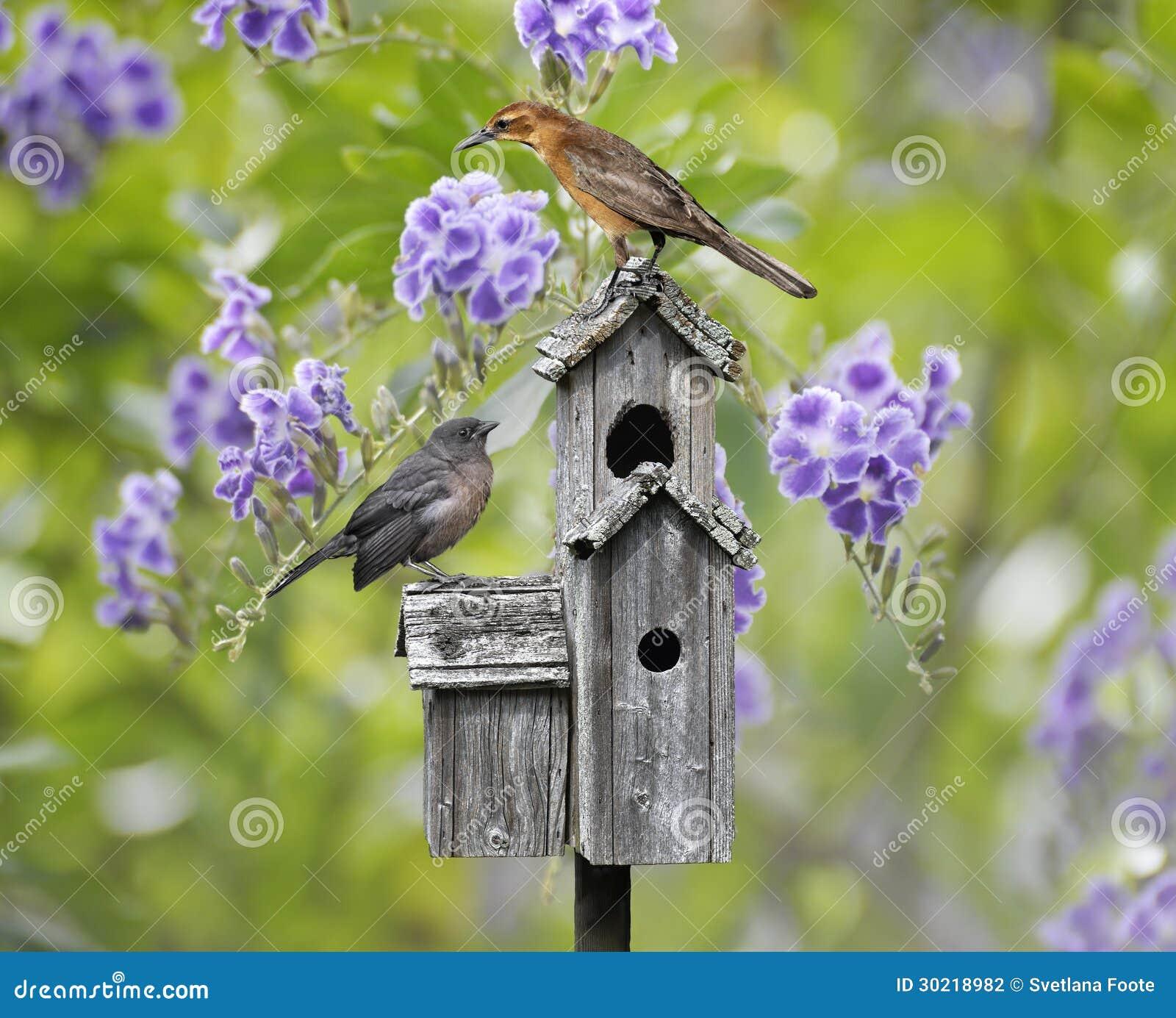 Fåglar på ett fågelhus