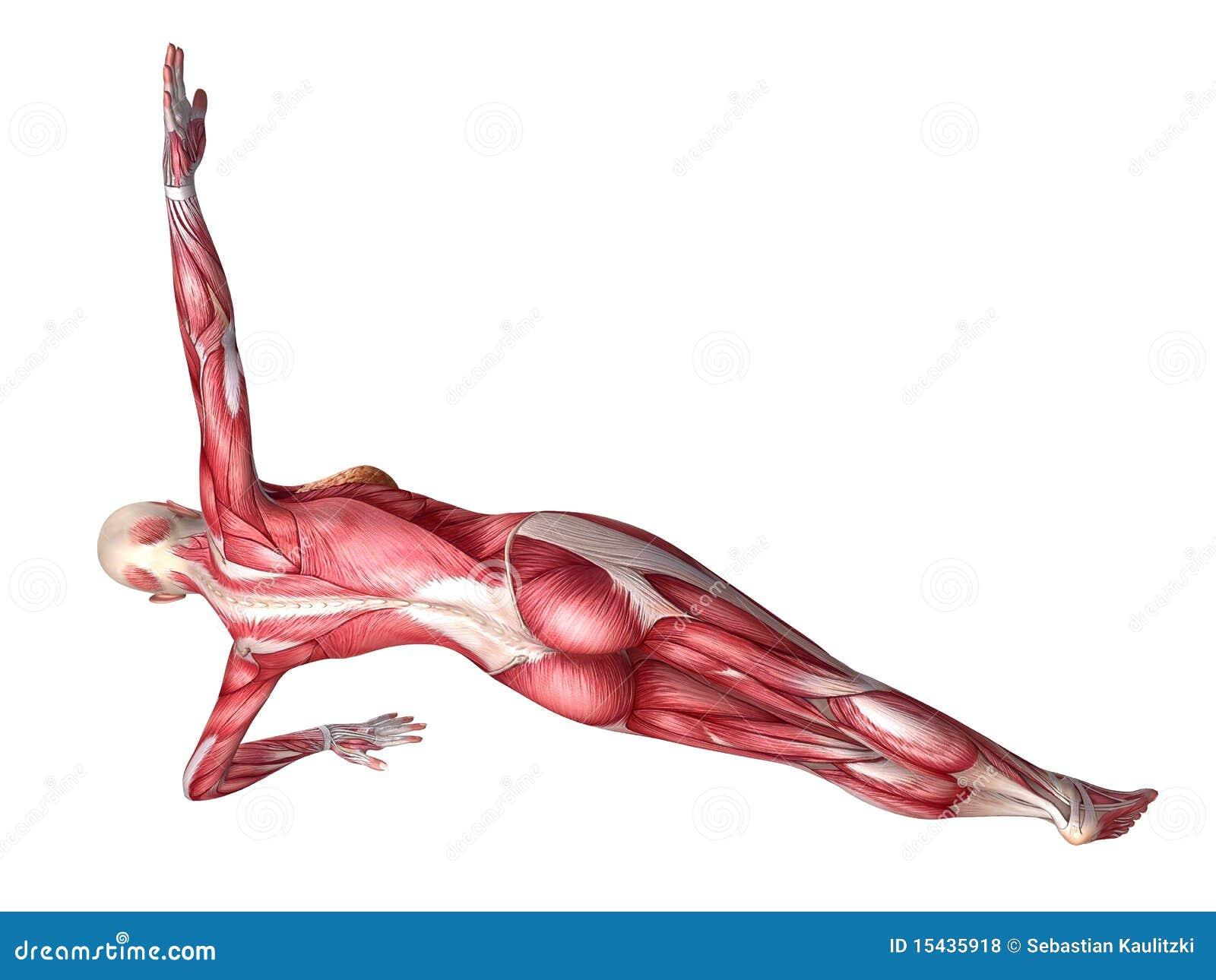 Female abs workout stock illustration. Illustration of diagram ...
