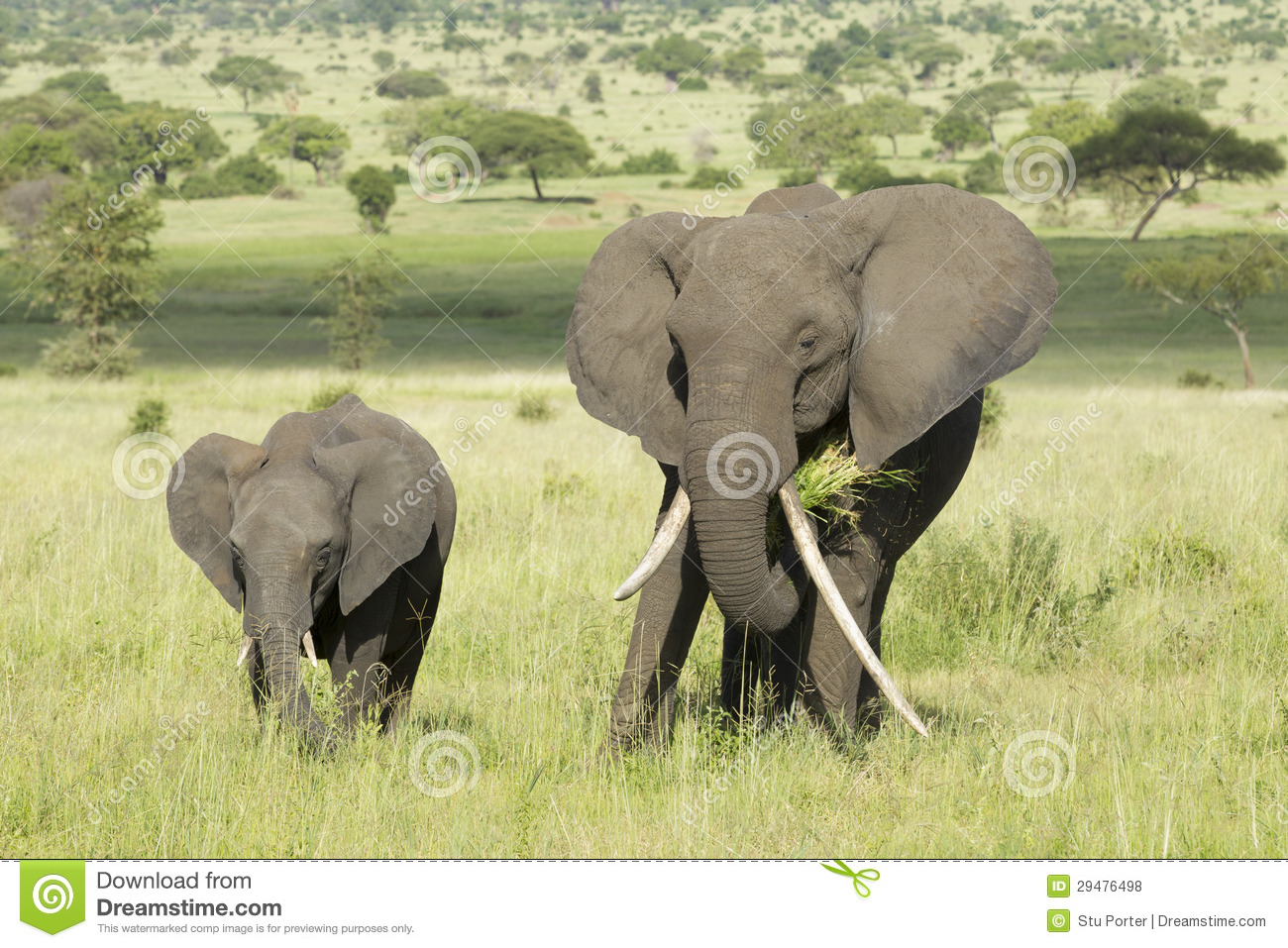 TrekNature | Loxodonta africana Photo