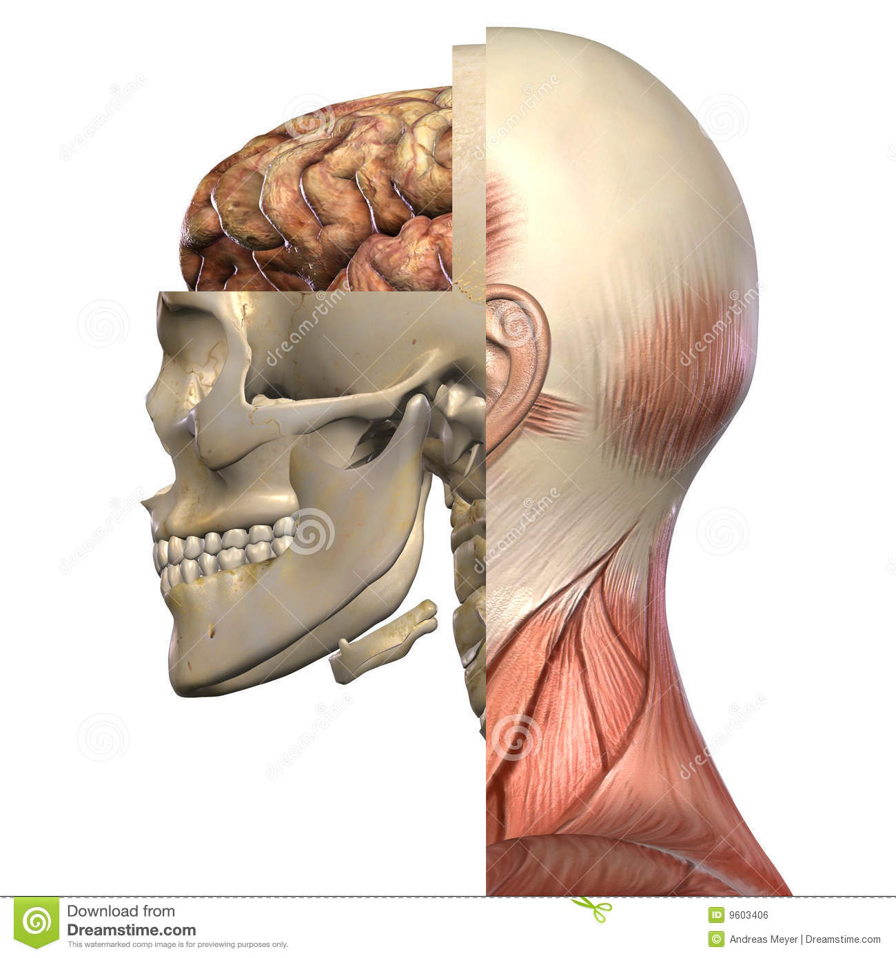 Female Anatomy Body stock illustration. Illustration of body - 9603406