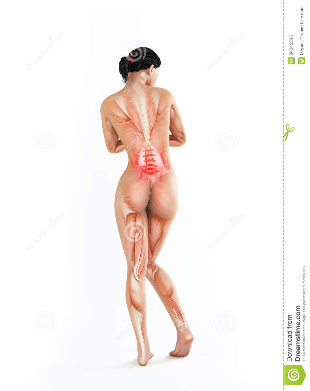 Female Anatomy - Lower Back Ache Stock Image - Image of osteoporosis ...
