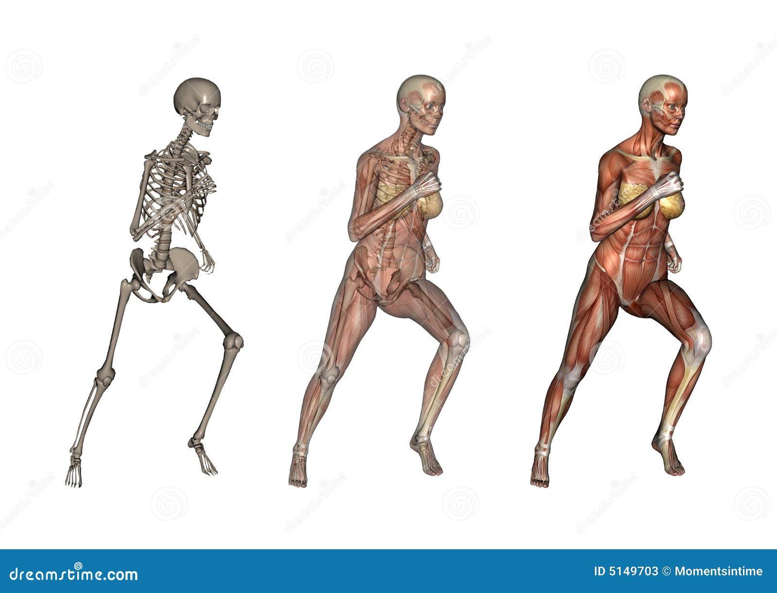Female Anatomy Running stock illustration. Illustration of sports ...