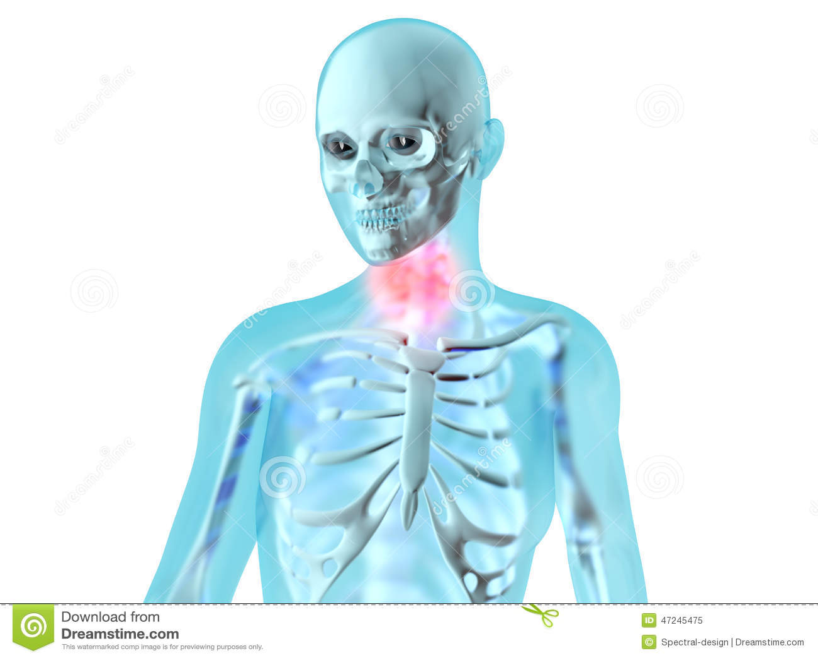 Female Anatomy - Throat Ache Stock Illustration - Illustration of ...