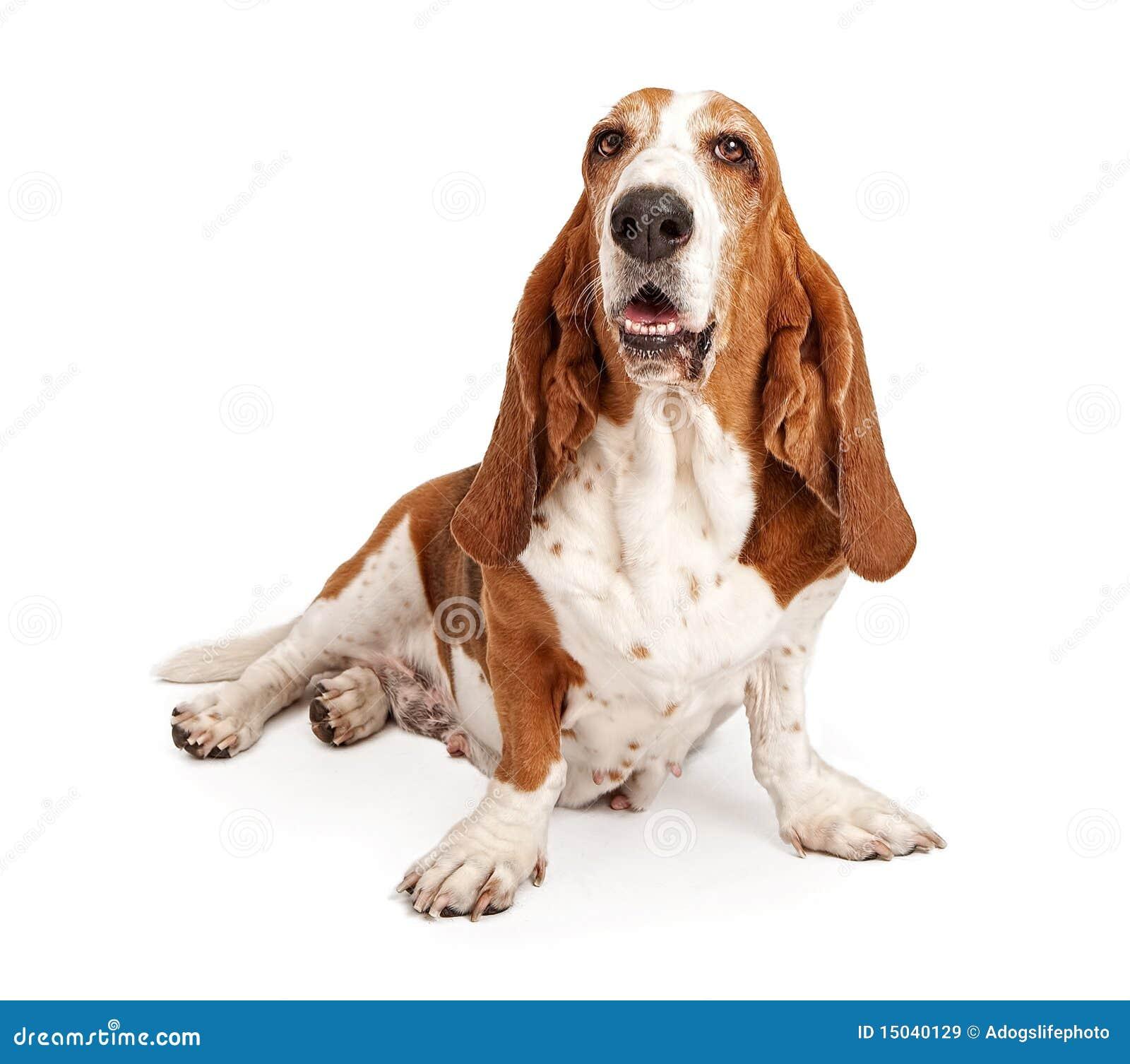 Happy Hound Dog Food