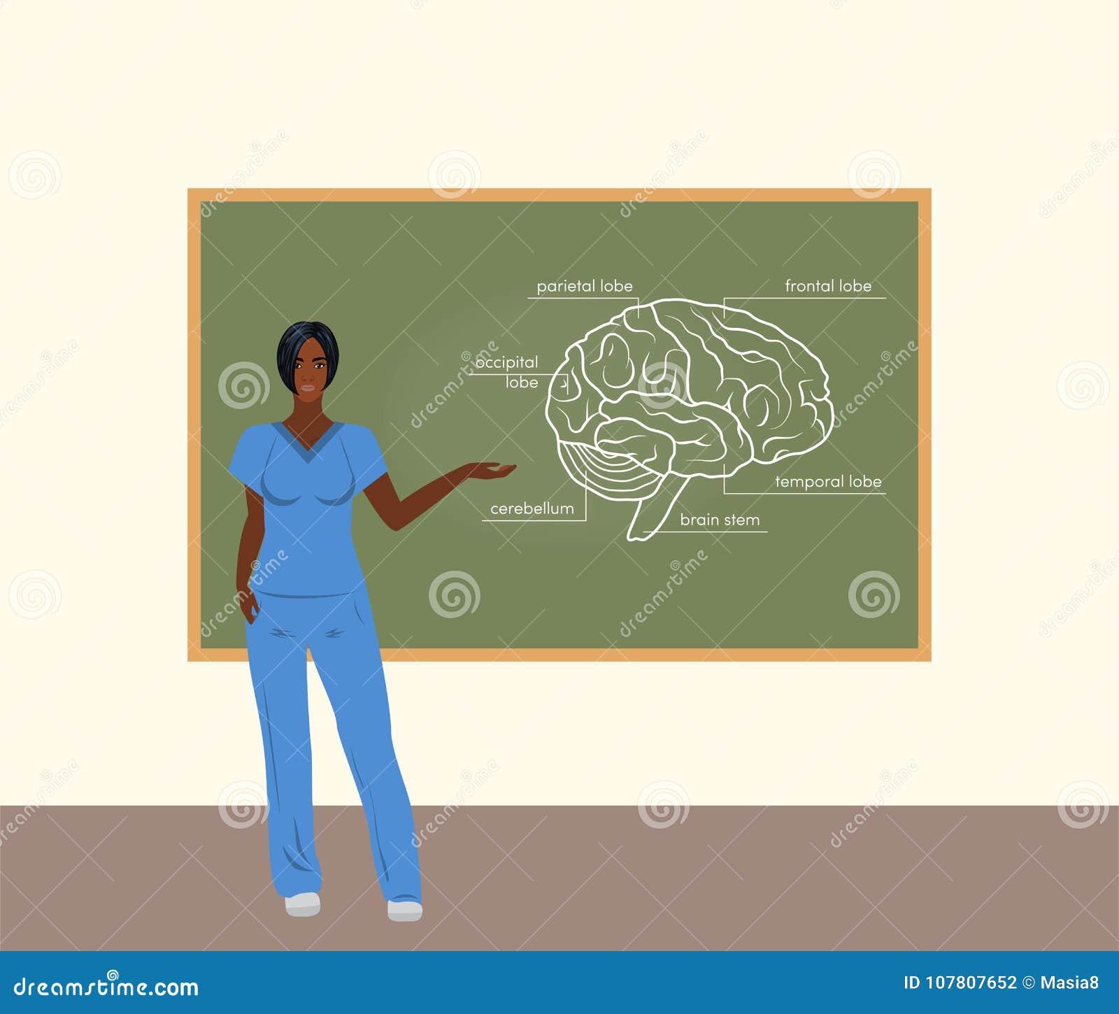 Female Doctor Teacher Vector Stock Illustration - Illustration of ...