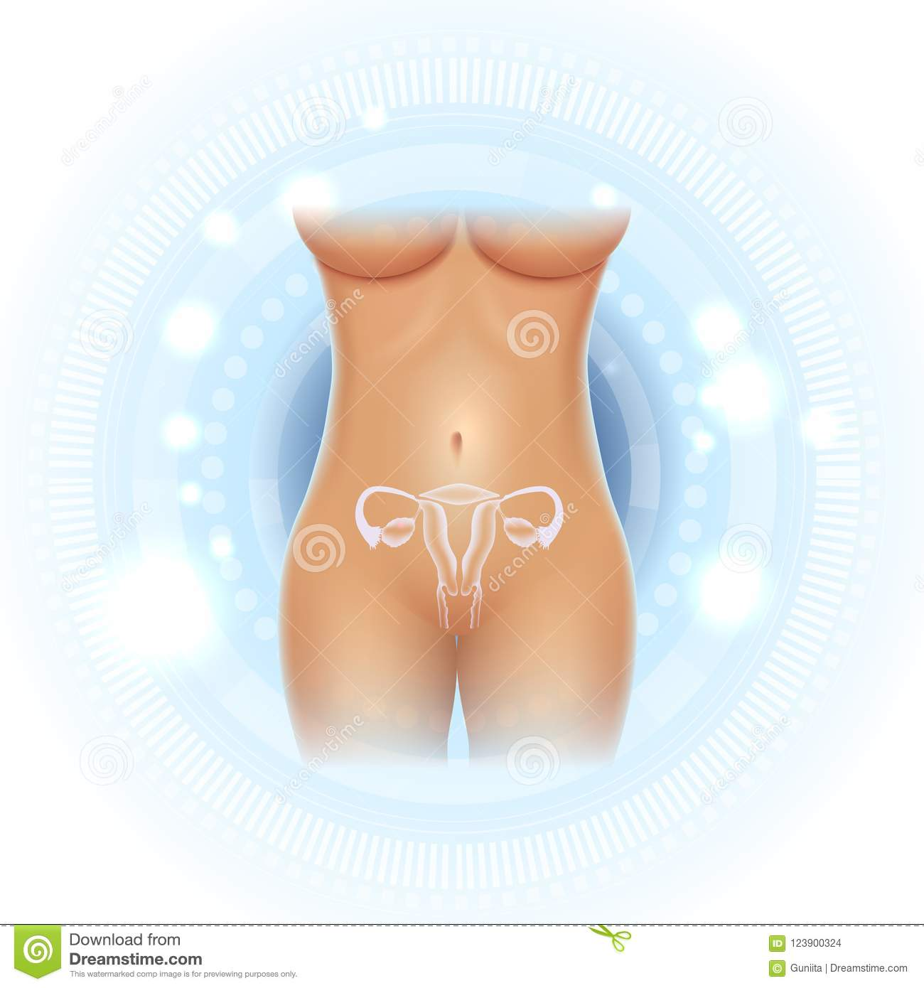 Female Body And Reproductive Organs Stock Vector Illustration Of