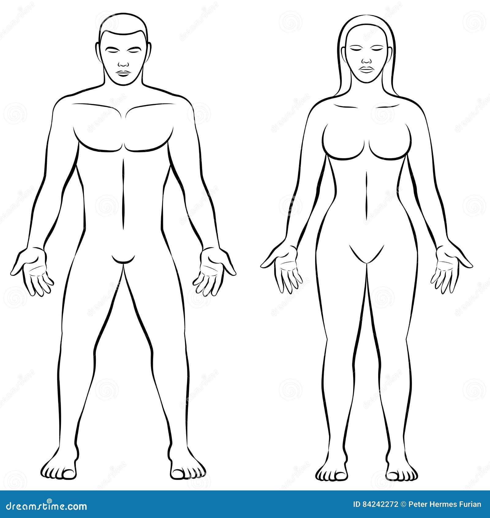 Female Body Shape Male Body Mass Illustration Stock