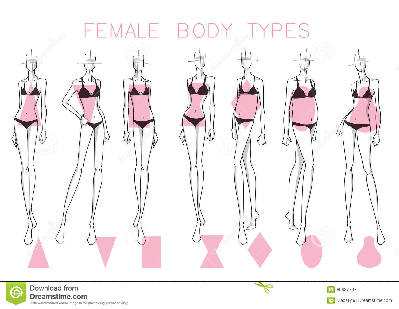 Female body shapes stock vector image 60637747