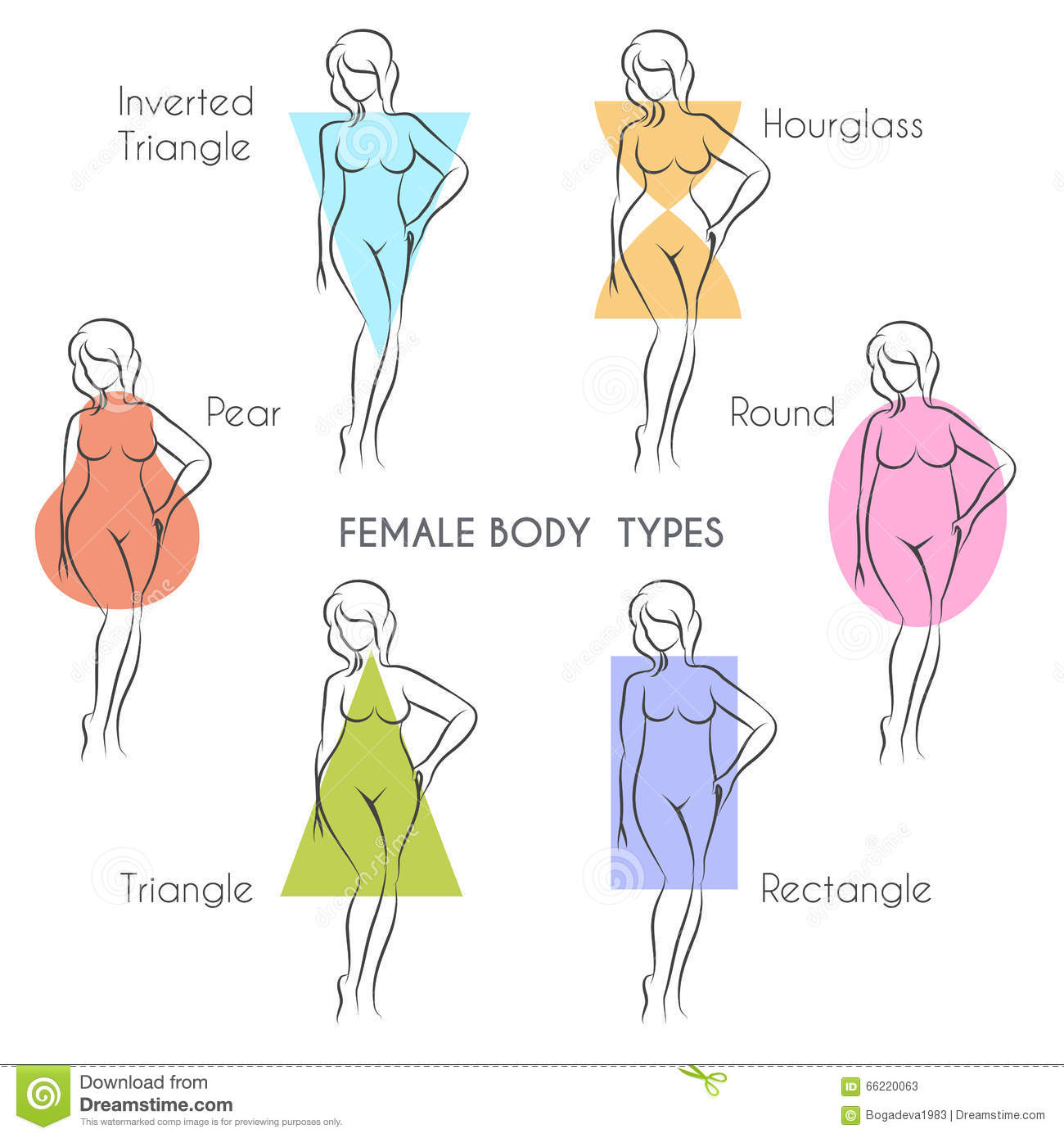 Female Body Types stock vector. Illustration of cartoon - 66220063