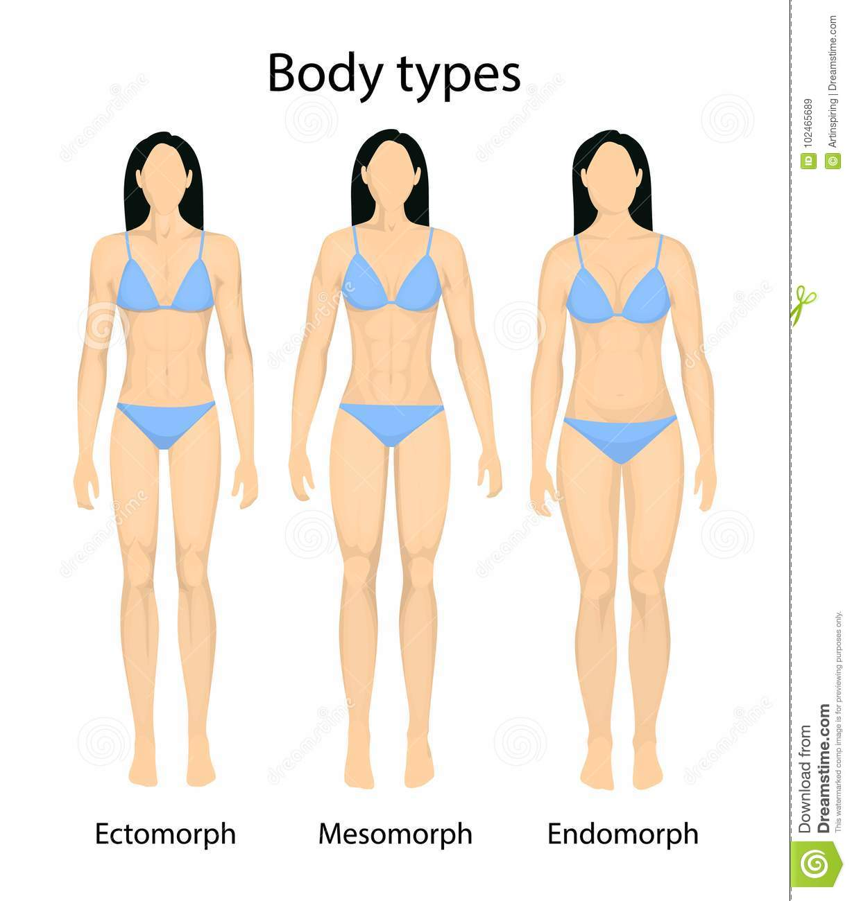 Female body types  stock vector  Illustration of endomorph