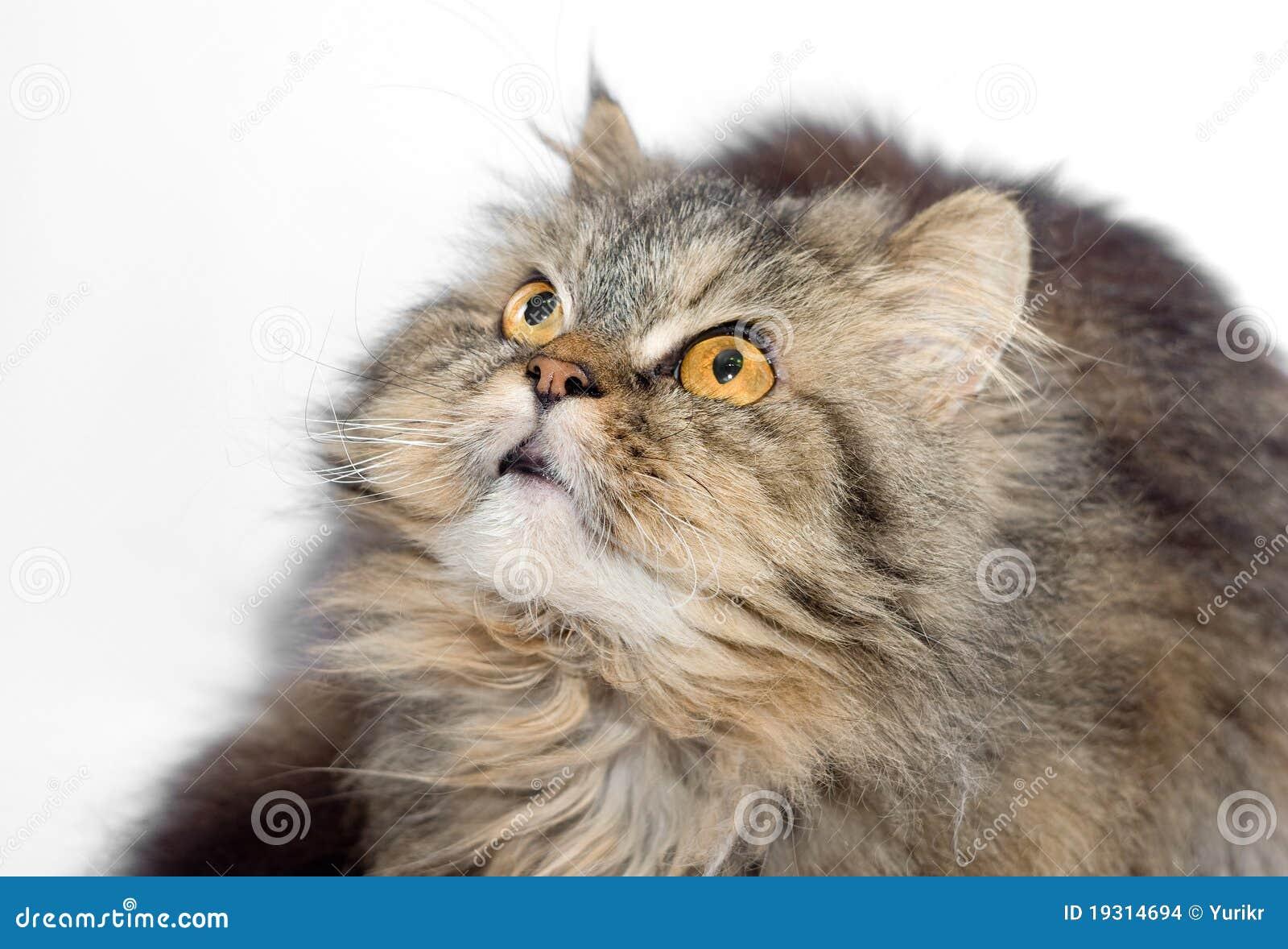 pretty cat collars